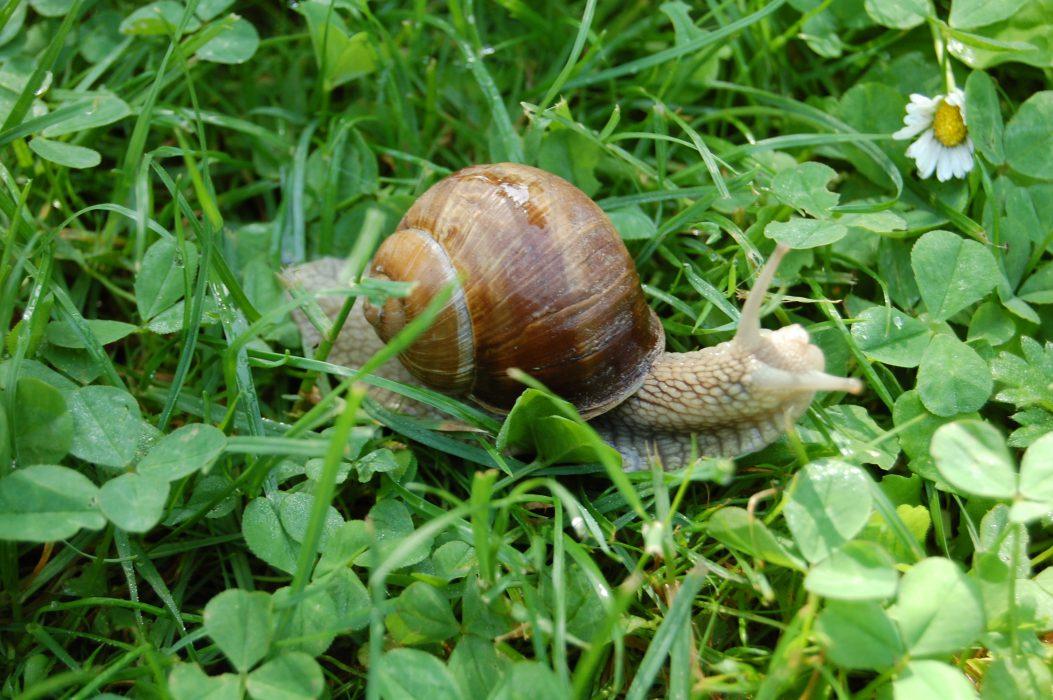 Op slakkenjacht in de bourgogne lekker weg bourgogne - Idee decoratie voorgerecht ...