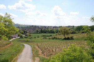 Wijngaarden Maranges ingeklemd tussen Mont Rome en Mont Sène