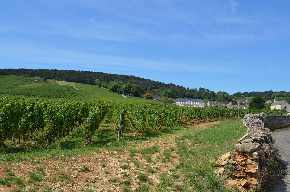 climats wijnrank